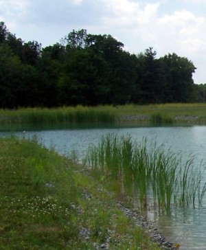 natural-earth-pond-buildings.jpg